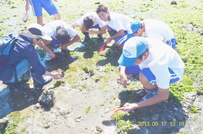 干潟の動物調査3