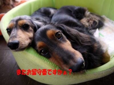 wanko00211_20121102075554.jpg