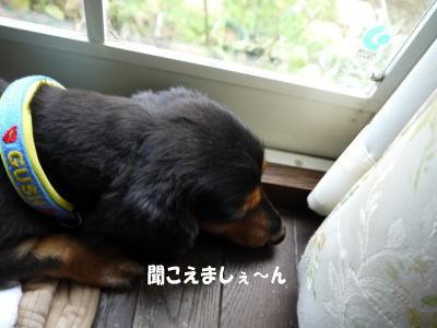 wanko00901_20120717115438.jpg