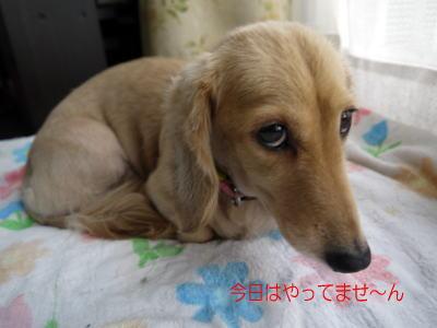 wanko00911_20120717115437.jpg