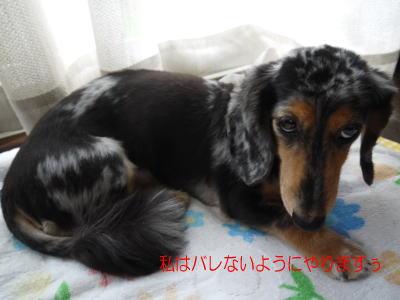 wanko00921_20120717115437.jpg
