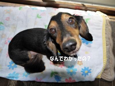 wanko00941_20120717123301.jpg
