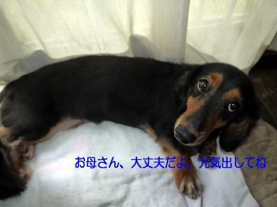 wanko01181.jpg