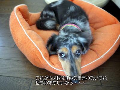 wanko01231.jpg