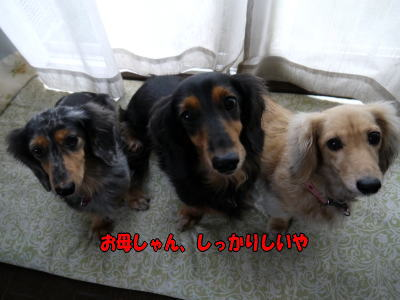 wanko01371.jpg