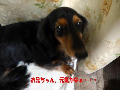 wanko01391.jpg