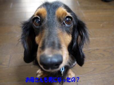 wanko01401.jpg