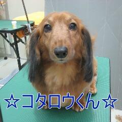 IMG_7304_2014011020354837d.jpg