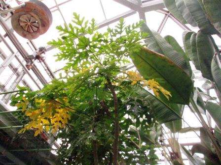 北山植物園3