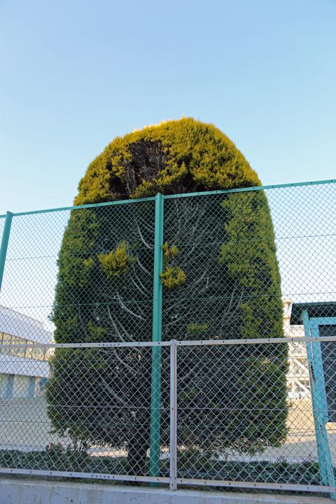 串カツの木