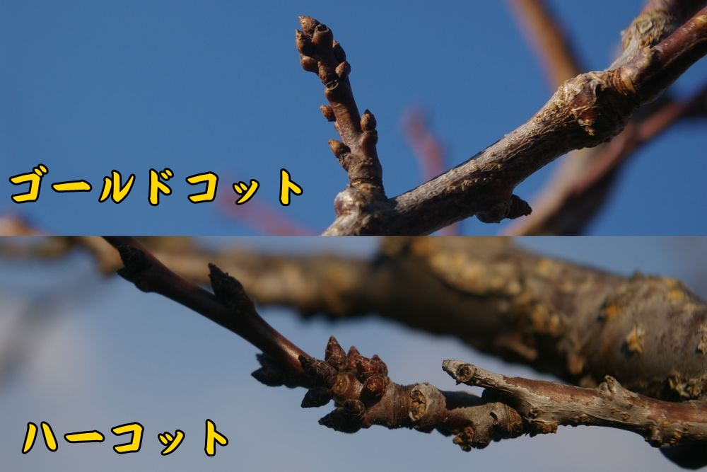 Gco_harcc1.jpg