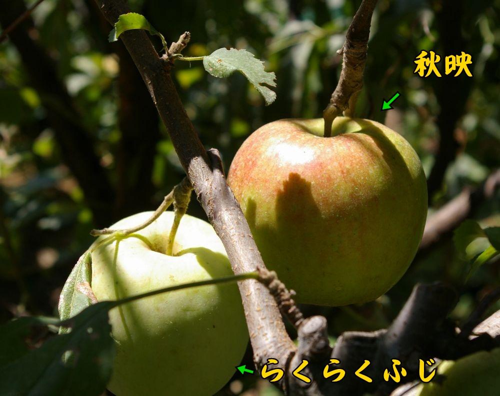 akibae_rakufuji0915c1.jpg