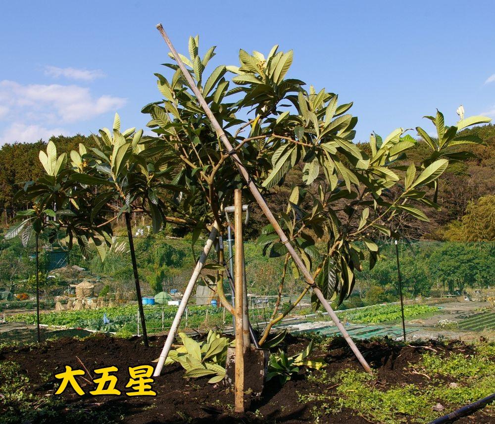 daigosei1119c1.jpg