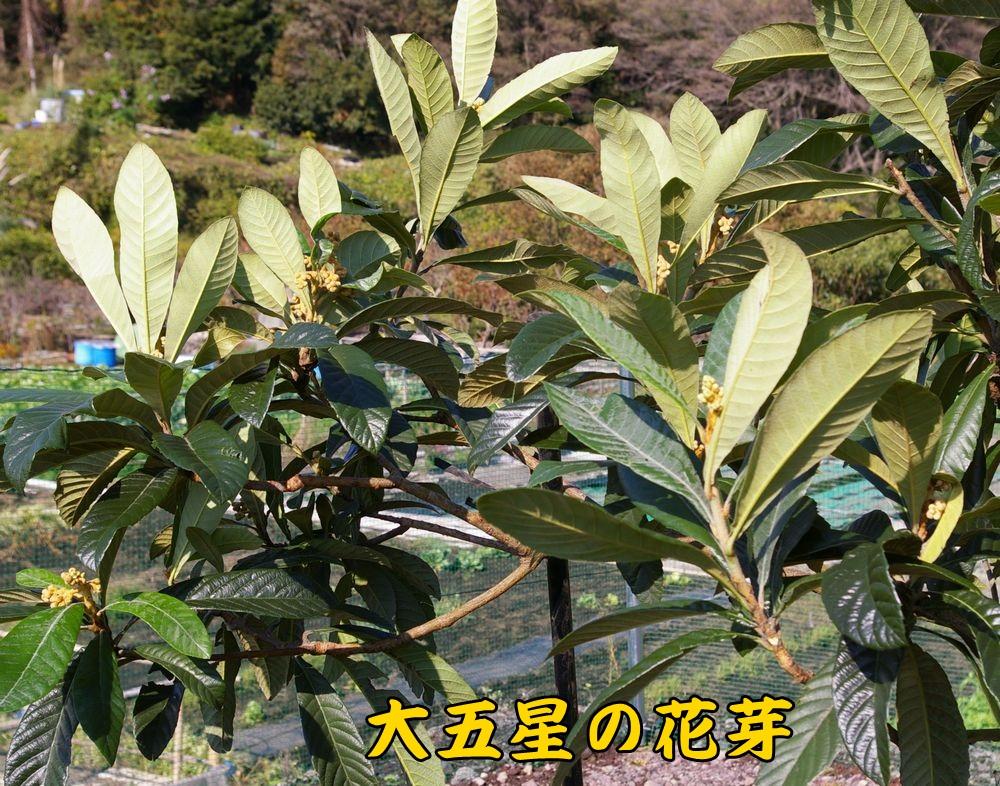 daigosei1119c2.jpg