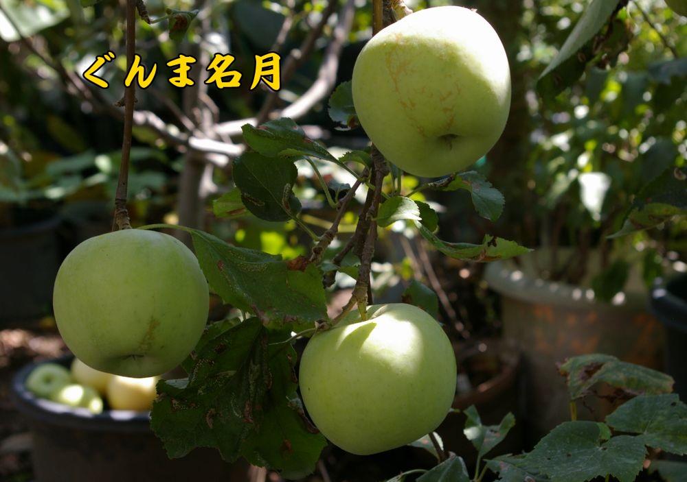 gunmameigetu0915c1.jpg