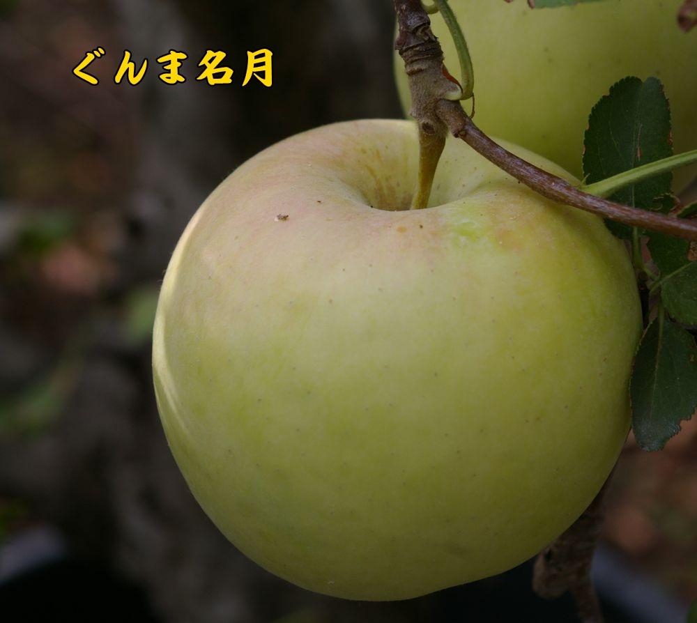 gunmameigetu1012c1.jpg