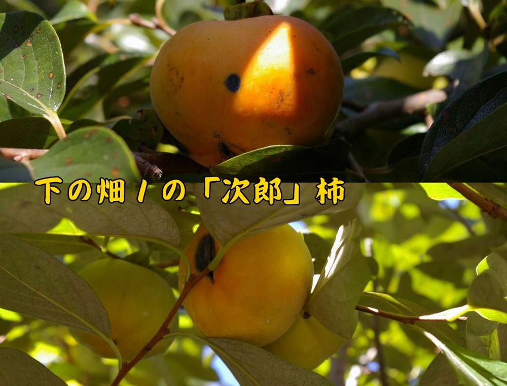 jiro1004c1.jpg