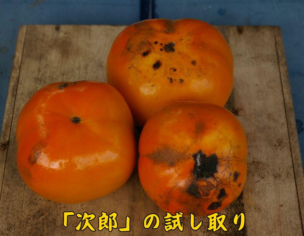 jiro1024c2.jpg