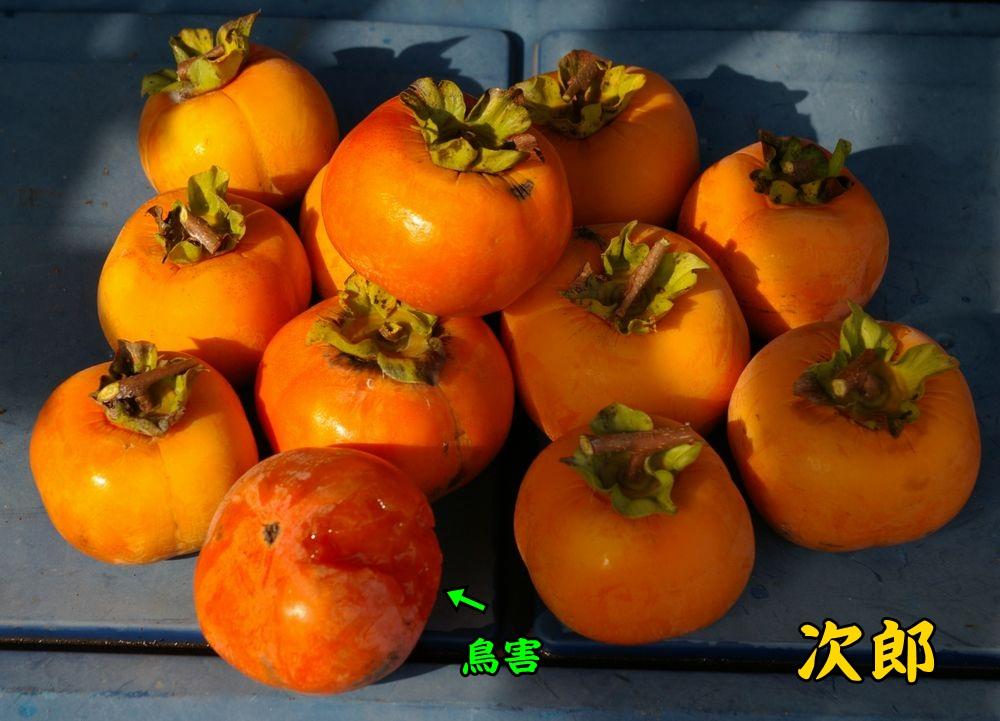 jiro1030c2.jpg