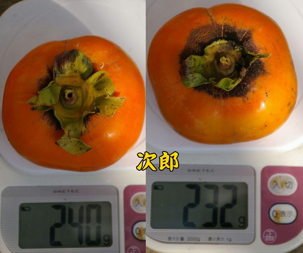 jiro1030c3.jpg