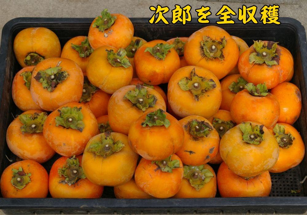 jiro1103c3.jpg