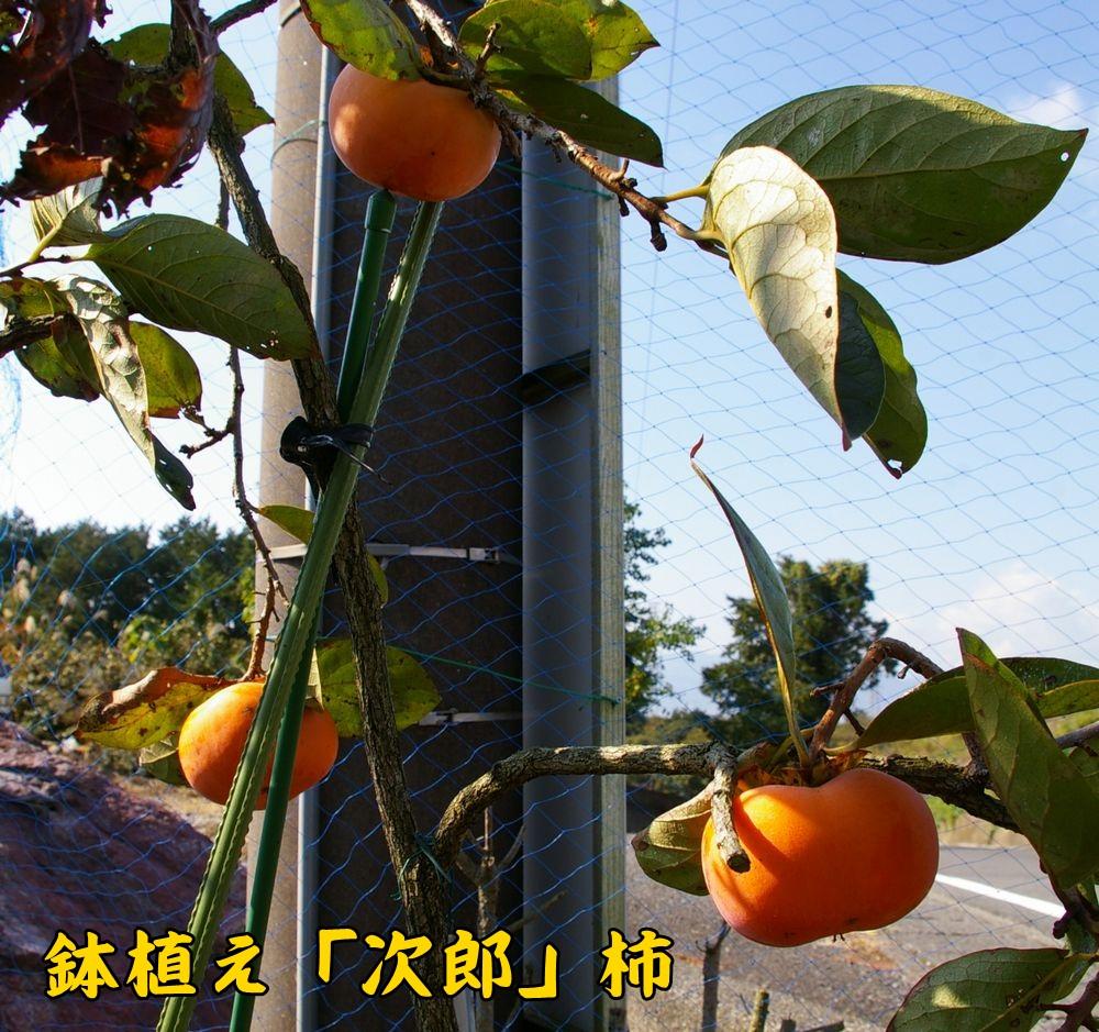 jiro1107b.jpg