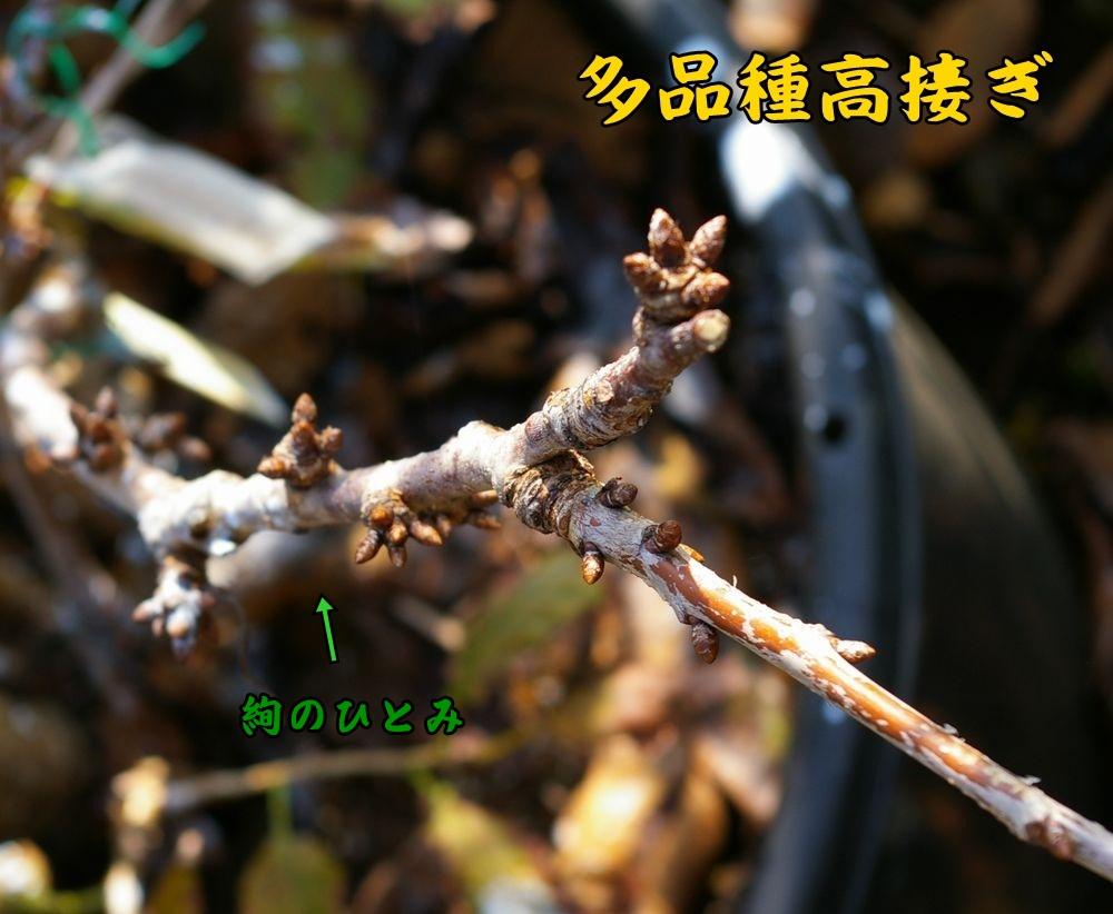 jyunnohitomi1124c1.jpg