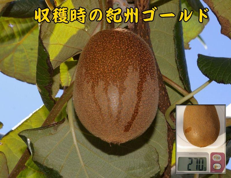 kisyu1019c1.jpg