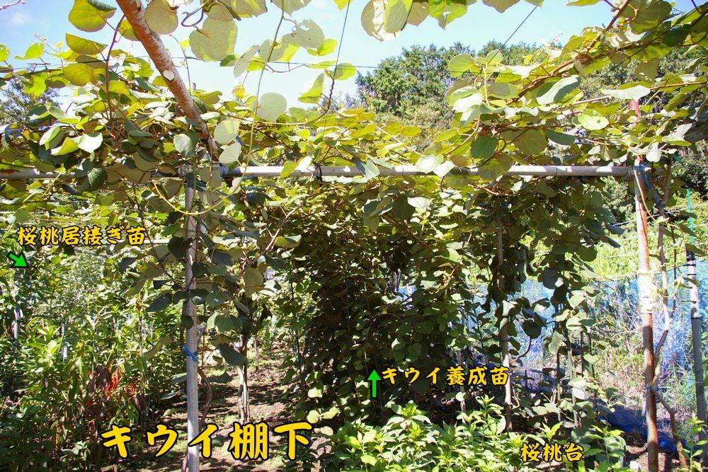 kiui0915c2.jpg