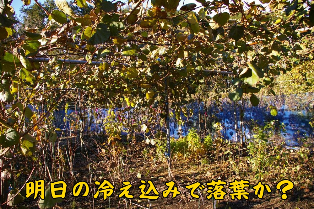 kiui1208c1.jpg