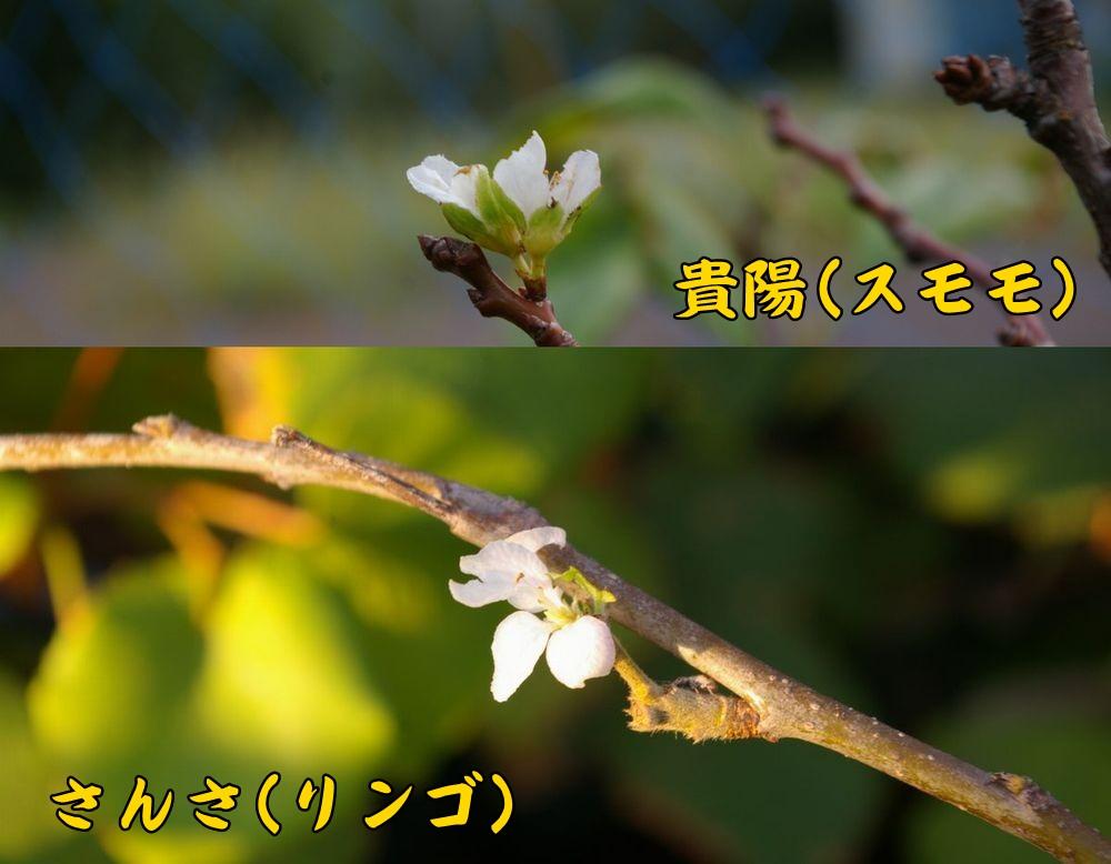 kiy_sans1008c1.jpg