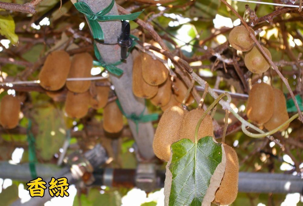 kouryoku1201c2.jpg