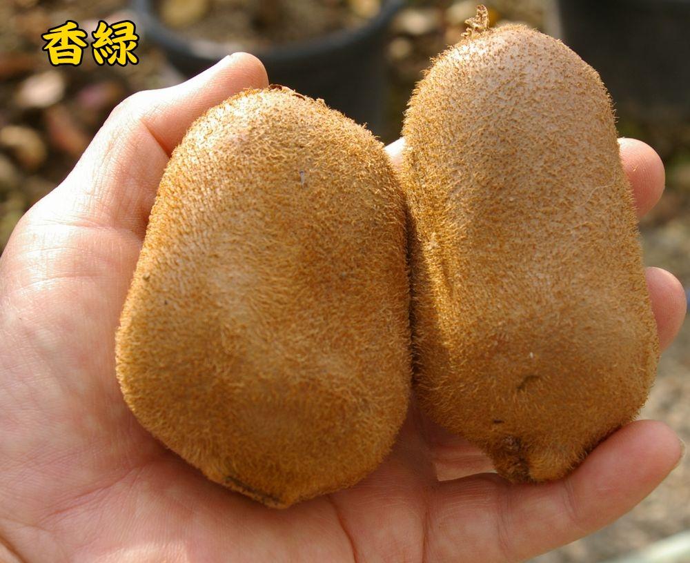 kouryoku1201c5.jpg