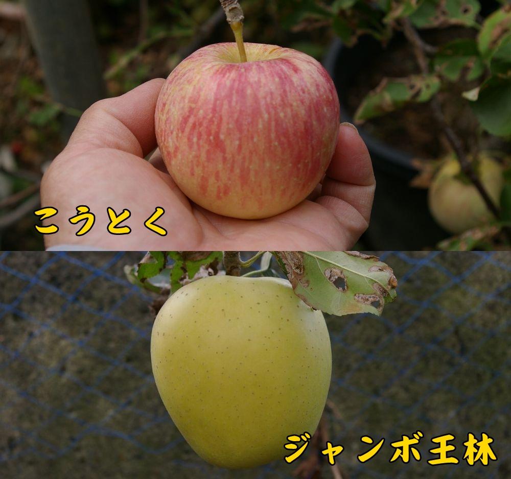kouto_orin1030c1.jpg