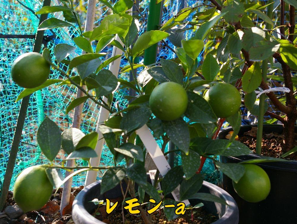 lemon1020c1.jpg