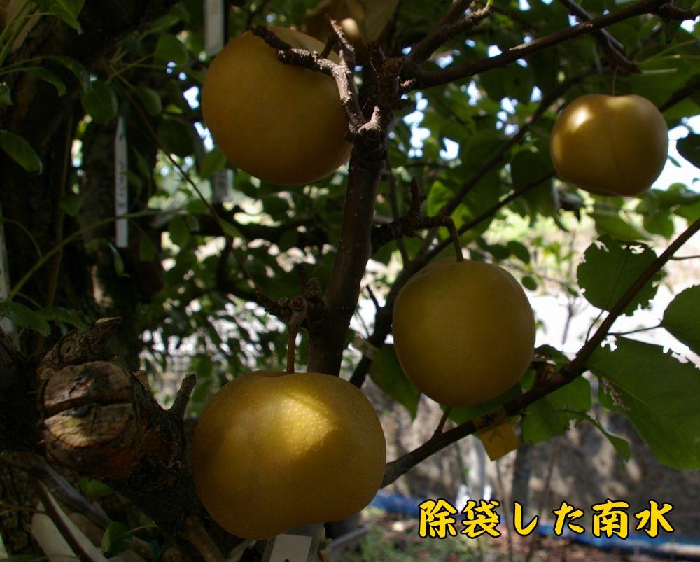 nansui0926c2.jpg