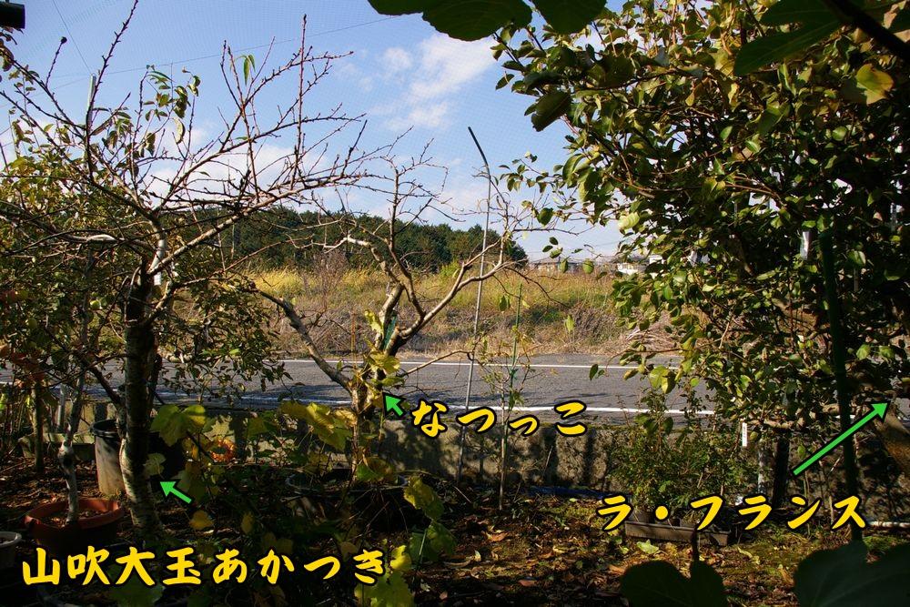 nasi_momo1119c1.jpg