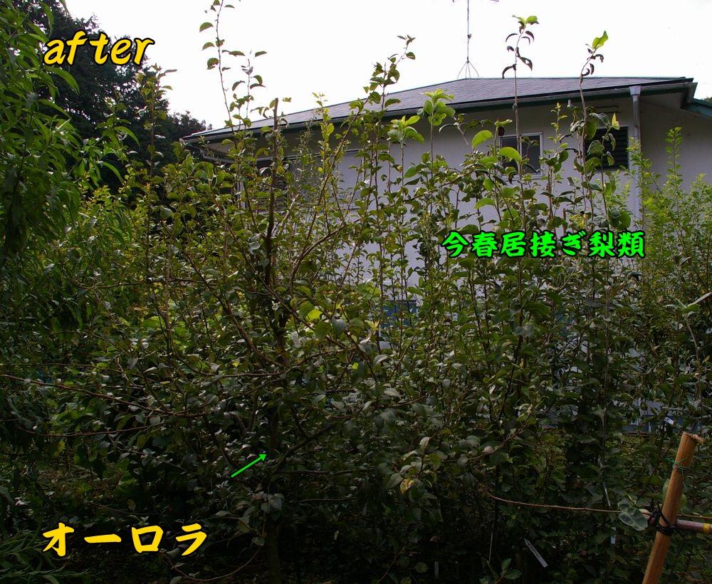 orora0929c3.jpg