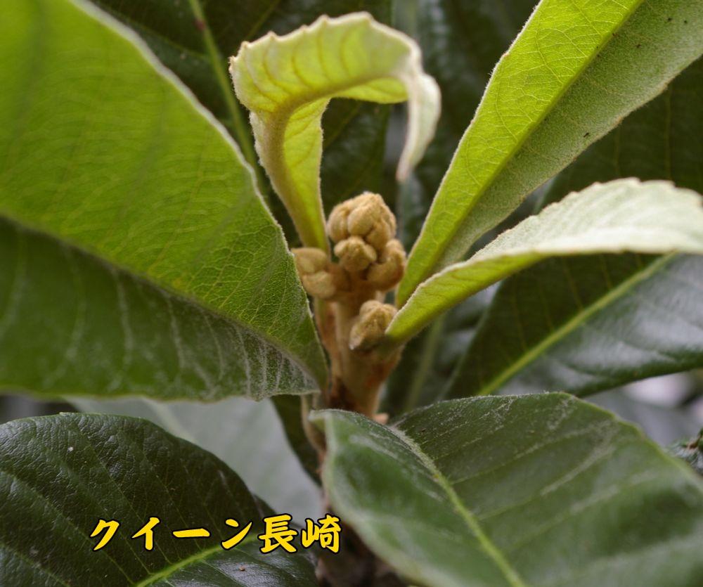 queennagasaki1003c1.jpg