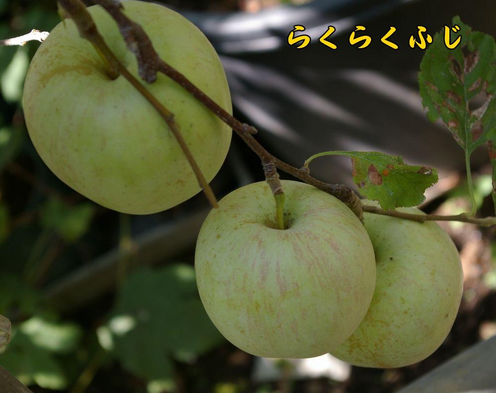 rakufuji0915c1.jpg