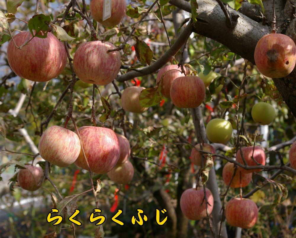 ringo1201c3.jpg