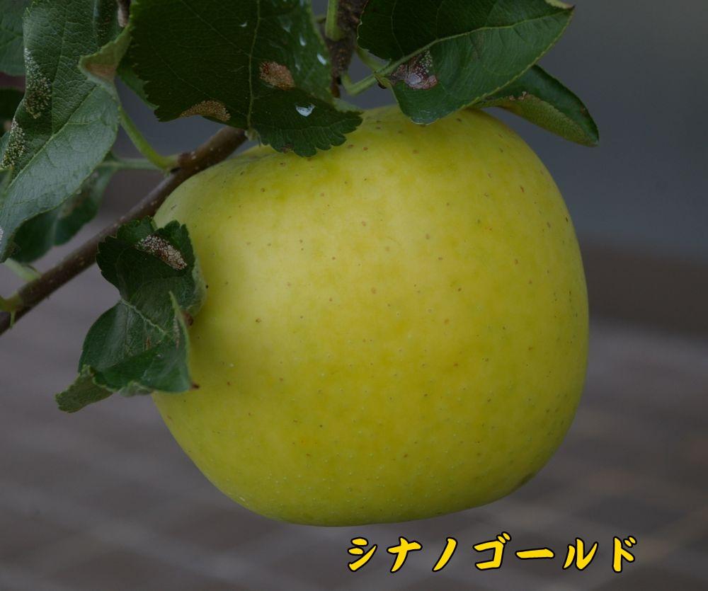 sinanoG1006c1.jpg