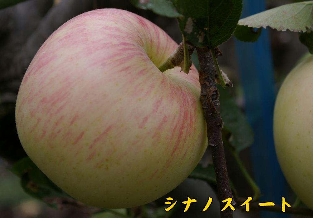 sinanoSW0924c1.jpg