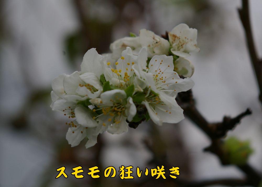 sumomo1008c1.jpg