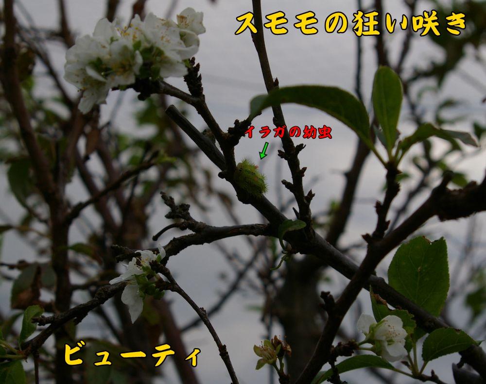 sumomo1008c2.jpg