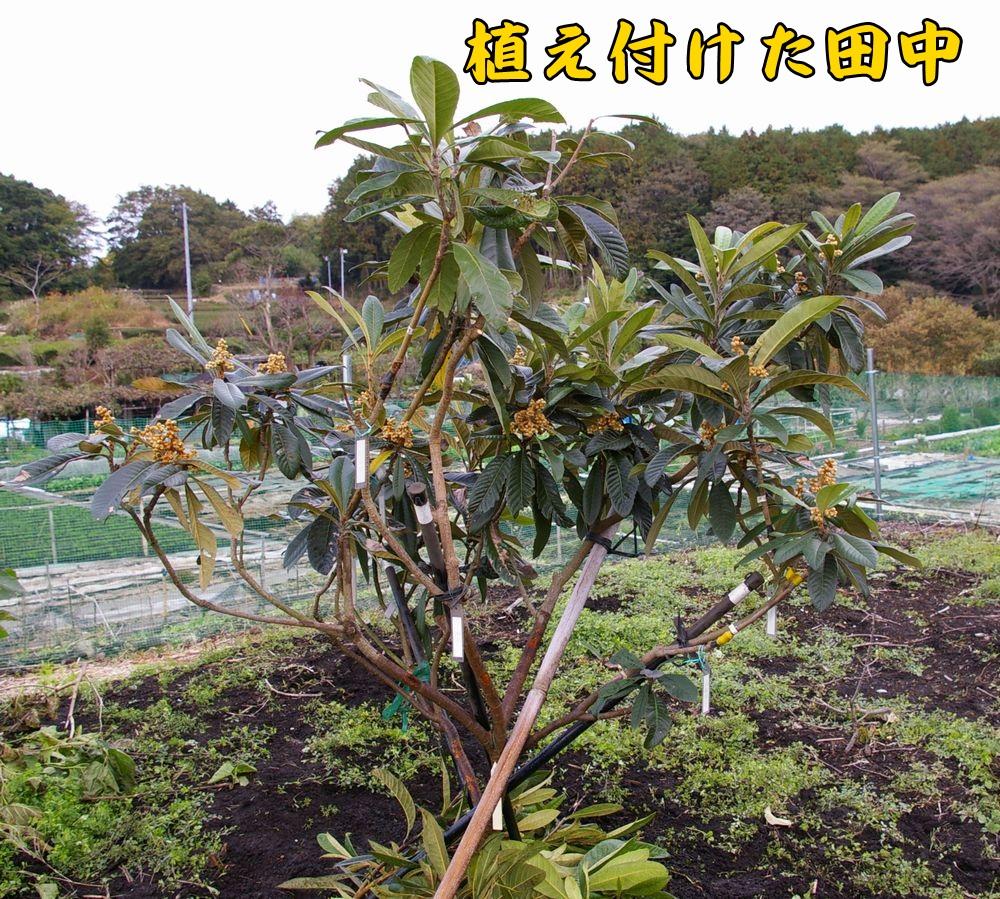 tanaka1119c2.jpg