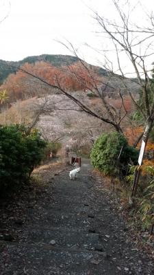 桜山公園3
