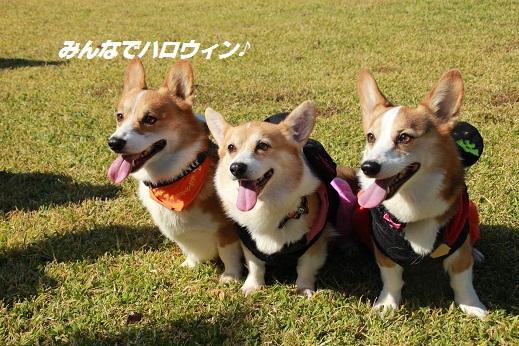 吉野ヶ里遺跡その1 2014-10-18-2