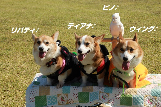 吉野ヶ里遺跡その1 2014-10-18-3