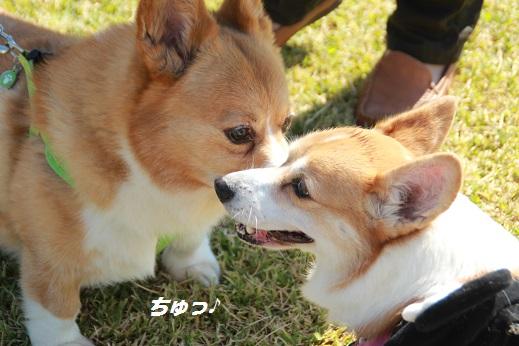 吉野ヶ里遺跡その2 2014-10-18-3